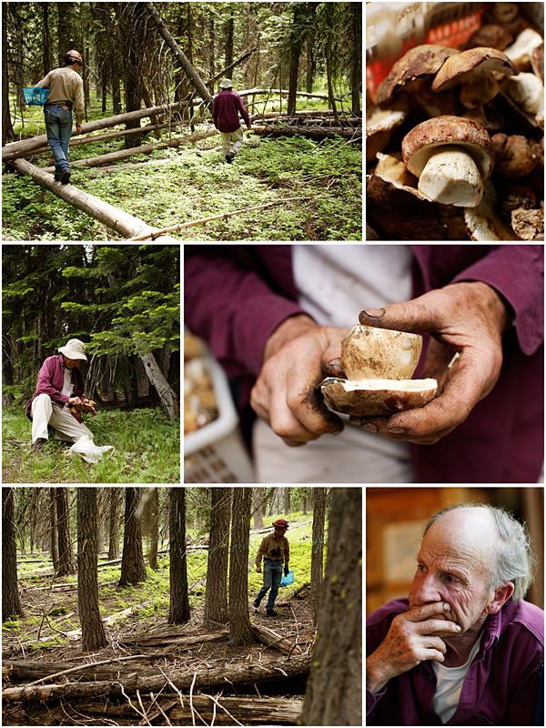 Images of Gene Theil, expert mushroom forager