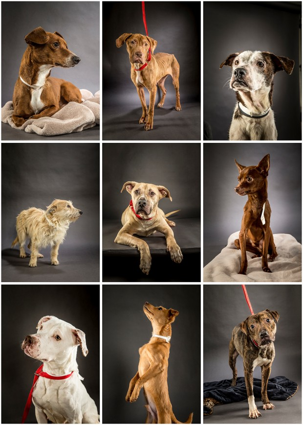blog new image of dogs