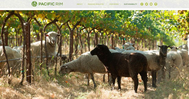 pacific_rim_sheep-feat