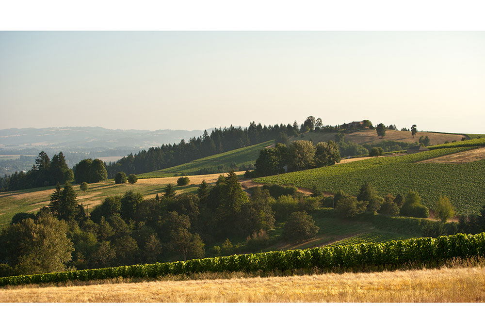 dundee-hills-winery