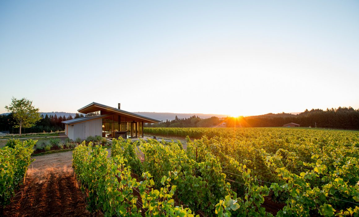 sunrise at L'Angolo Estate Winery